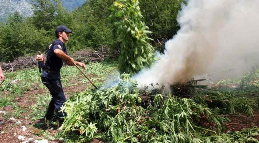 Marihuana w Albanii