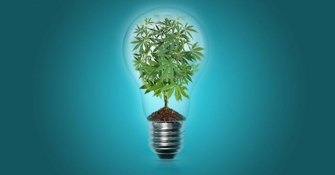 20 pomysłów na biznes konopny