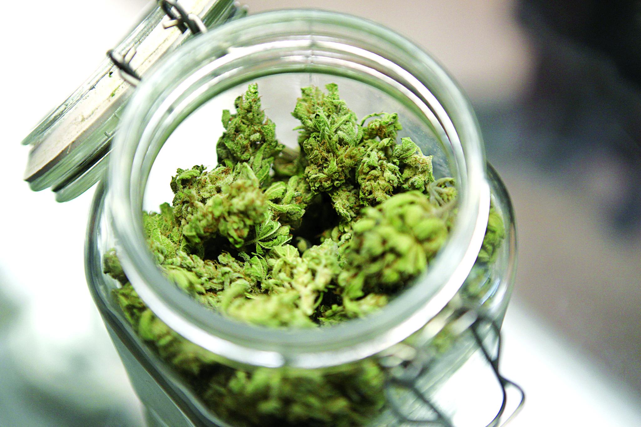 Upraw medycznej marihuany w Polsce nie będzie?!