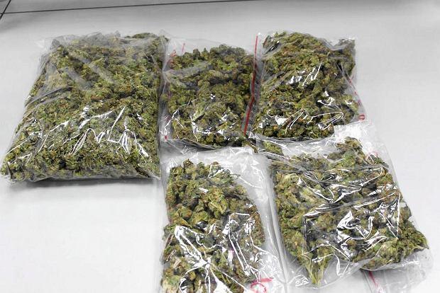 marihuana hiszpania