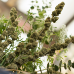 Bukiet z marihuaną