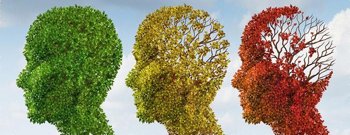 CBD opóźnia starzenie się mózgu