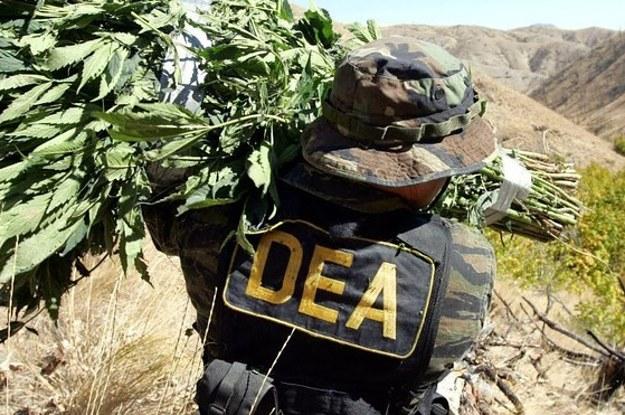 Kłamstwa DEA
