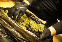 Marihuana w prezencie dla siostry