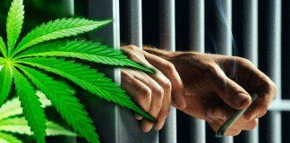 Marihuana w więzieniu w Czarnem