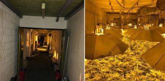 Plantacja marihuany w bunkrze przeciwatomowym