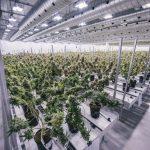 Fabryka marihuany Canopy Growth