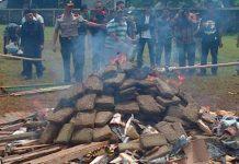 Ognisko z marihuany w Indonezji