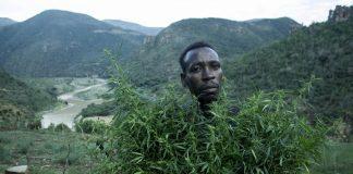 Legalizacja marihuany w RPA