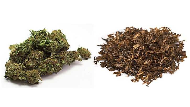 Mieszanie marihuany z tytoniem