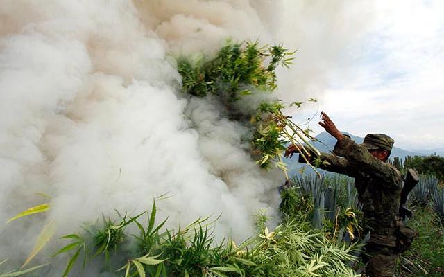 Masowa likwidacja plantacji konopi w Albanii