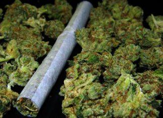 Syn posłanki PO zatrzymany z marihuaną