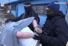 policja likwiduje plantacje pseudokibiców z sosnowca warta milion złotych