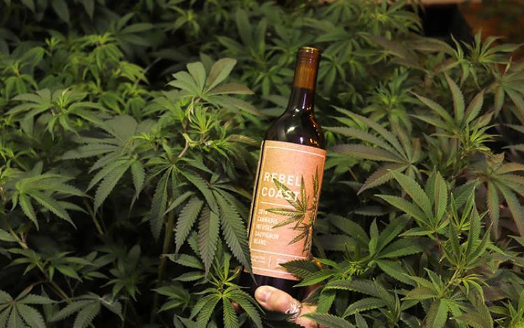 wino z marihuany po ktorym nie ma kaca