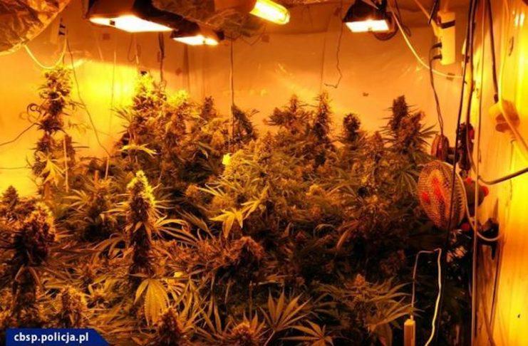 cbśp hiszpańska policja marihuana 10kg