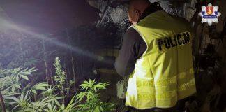 dziadek gandzia łódzka policja plantacja marihuany