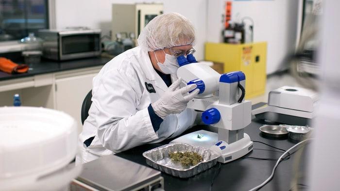 Naukowcy z poznania stworzyli tabletke z konopi. Lek działa