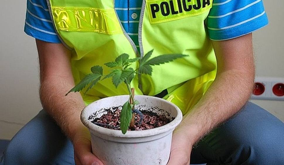 Palili zioło w szpitalu bielska policja cannabisnews
