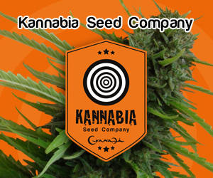 nasiona marihuany outdoor - Sklep