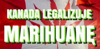 Kanada zalegalizowała marihuanę