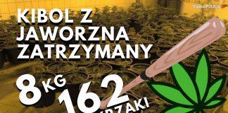 pseudokibic z jaworzna zatrzymany - uprawial marihuanę.