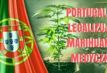 Portugalia zalegalizowała marihuane medyczną. Będzie ona dostępna na receptę dla pacjentów.