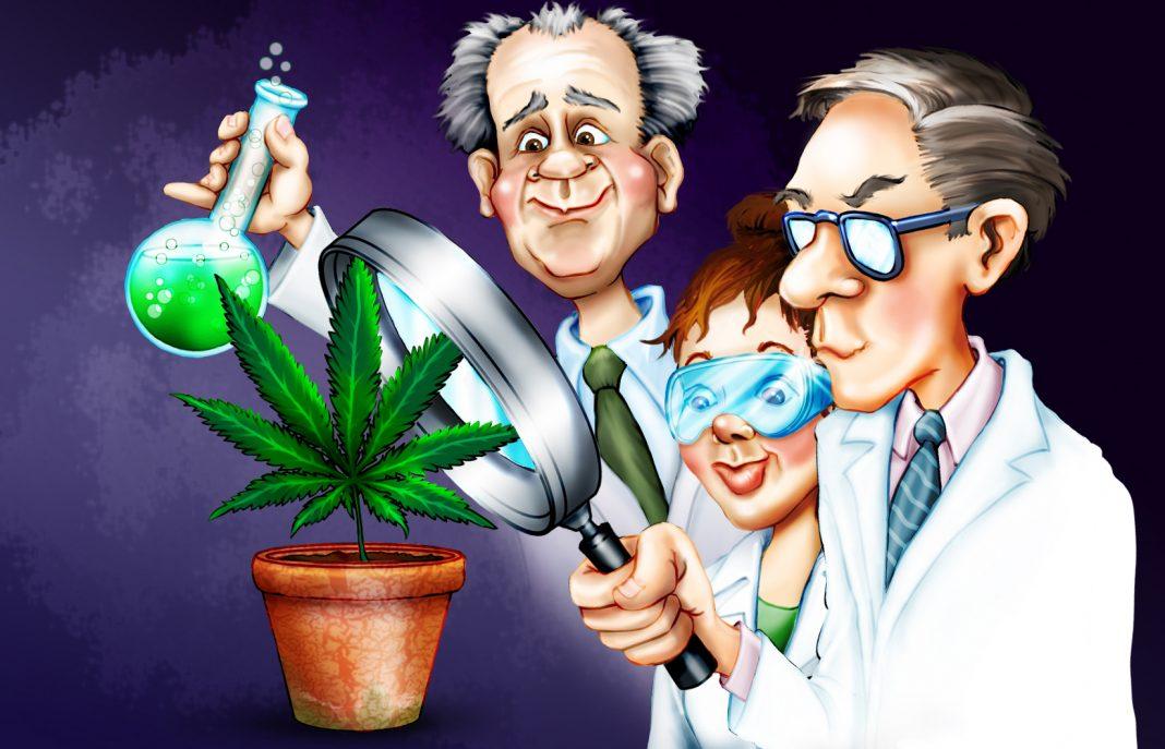 Badania naukowe długotrwałe zażywanie marihuanay SWPS Uniwersytet Warszawa