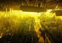 Plantacja konopi indyjskich w zakopanym kontenerze. Uprawa marihuany Olsztyn