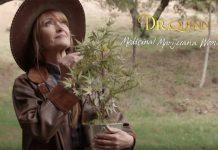 Dr quinn na haju. Kultowy serial i jego głowna bohaterka leczy medyczną marihuaną