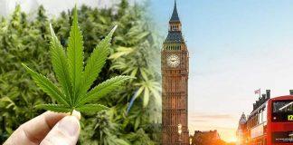 Naukowcy z Wielkiej Brytanii dokonali przełomowego odkrycia. Marihuana może pomóc w walce z rakiem trzustki i przedłużyć zycie chorych trzy razy