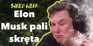 WeedWeek Elon Musk 150 tysięcy