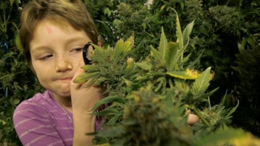 Dzieci chore na raka są leczone marihuaną. Często z bardzo dobrymi efektami.
