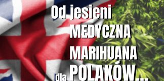 Wielka brytania legalizuje medyczną marihuanę. Medyczna marihuana bedzie dostepna w UK od jesieni 2018