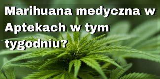 Czy marihuana medyczna będzie dostępna w aptece jeszcze w tym tygodniu?