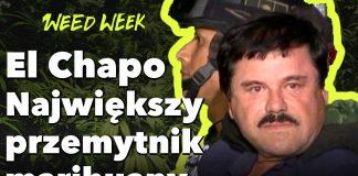 Proces El Chapo | Narcos | Marihuana vs.Alkohol | WeedWeek#20