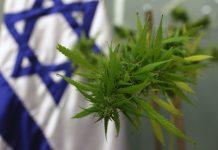 Izrael uzyskał zgode na eksport marihuany medycznej.
