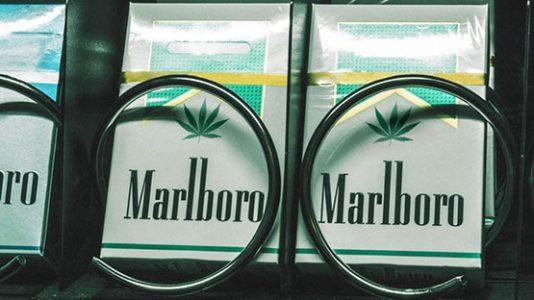 MArlboro inwestuje w konopie indyjskie