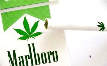 Właściciel marki Malrboro inwestuje w rynek marihuany