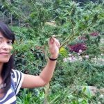 Tajlandia jako pierwszy kraj Azji południowej, legalizuje marihuanę medyczną