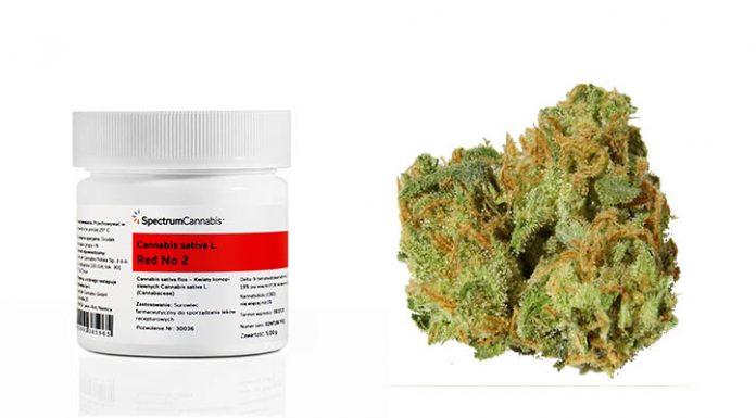 Medyczna marihuana dostępna w aptekach