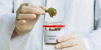 Apteki w Zurychu chcą legalizacji marihuany