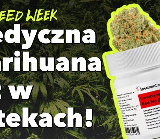 Medyczna marihuana w Aptekach, Kali i jego 1,5 metrowe Bongo oraz przemyt 60 kg marihuany