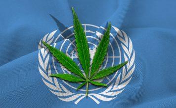 Światowa Organizacja Zdrowia wystosowała rekomendację aby usunąć Cannabis z listy substancji psychoaktywnych i kontrolowanych