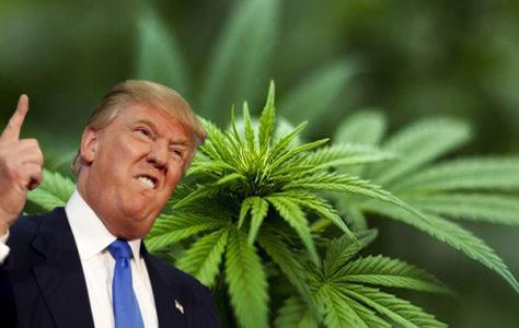 Donald Trump podpisał Farm Bill