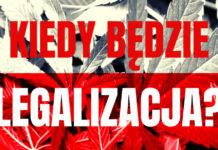 Kiedy będzie legalizacja w Polsce? CannabisNews