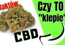 """Czy susz CBD, tkzw. """"legalne zioło"""" klepie? Czy jest po tym haj? 8 rzeczy, których możesz nie wiedzieć o CBD"""