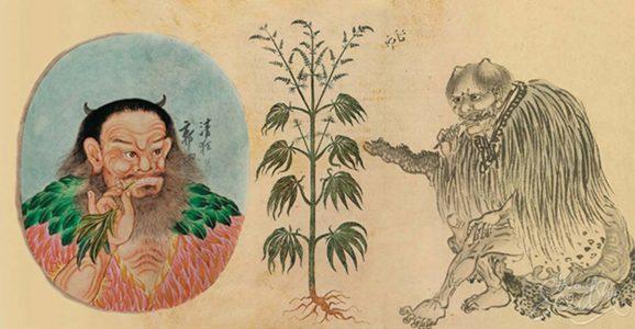 Historia konopi w Chinach sięga 2800 r p.n.e. Czy Chińska konopia zdobędzie świat?