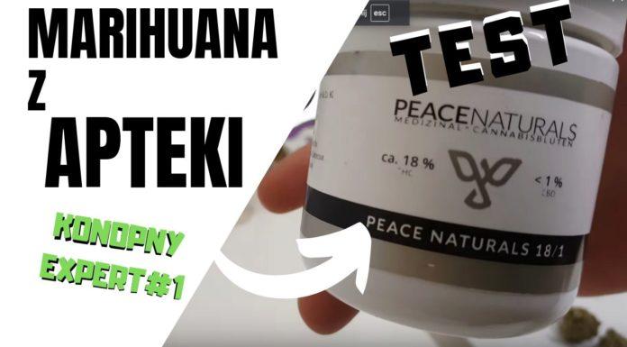 konopny ekspert testuje susz z apteki - medyczna marihuana peace naturals