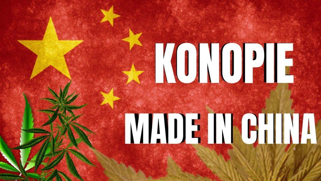 Chiny produkują prawie połowę uprawianych na świecie konopi