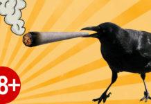 Ta wrona ewidentnie lubi palić marihuanę z wiadra